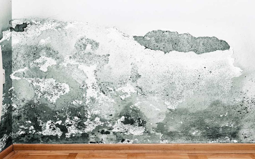 How Can a Private Claims Adjuster in West Palm Beach Help My Business with a Water Damage Claim?